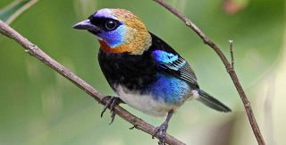 River and Mountain Belize Birding Package