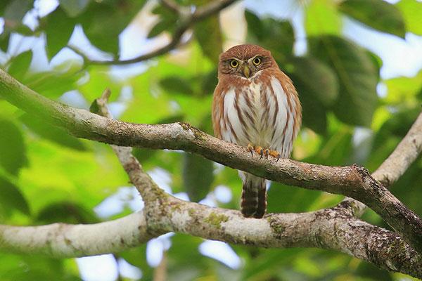 Bird at Crystal Paradise Lodge