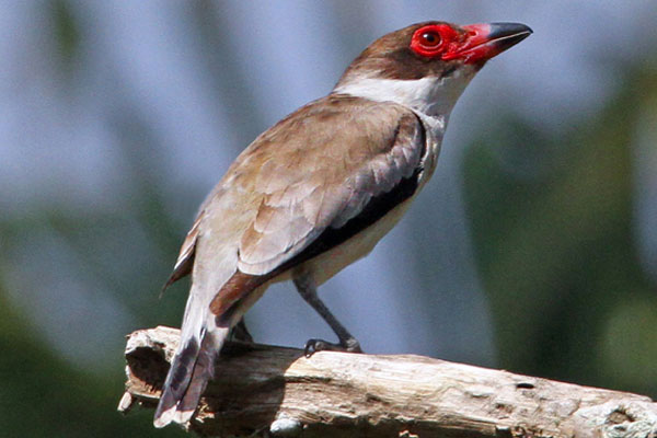 Belize Birding Tours With Paradise Expeditions Belize